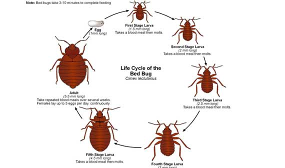 how to avoid bed bugs at work